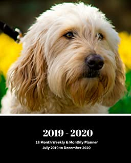 2019 - 2020 | 18 Month Weekly & Monthly Planner July 2019 to December 2020: Goldendoodle Dog Breed Pets Vol 23 Monthly Calendar with U.S./UK/ ... Holidays– Calendar in Review/Notes 8 x 10 in.
