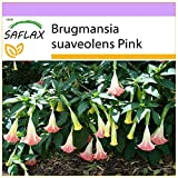 SAFLAX - Trombone d'angelo rosa - 10 semi - Brugmansia suaveolens Pink