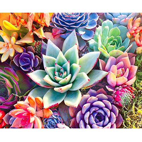 OMYLOVE 5D Diamond Painting Kits for Adults - Full Drill Round Rhinestone Painting Home Wall Decor (Succulent Plant 12x16inch)