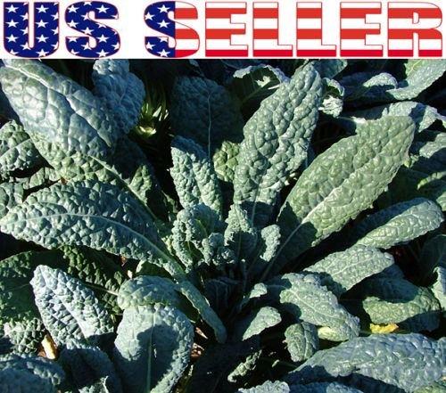Heirloom Seeds Toscano Kale Dinosaur Kale David/'s Garden Seeds Kale Toscano 200 Non-GMO