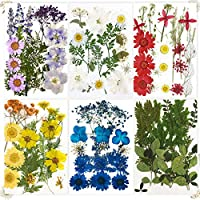 114-Piece Futung Dried Pressed Flowers Dry Leaves Real Herbs Kit