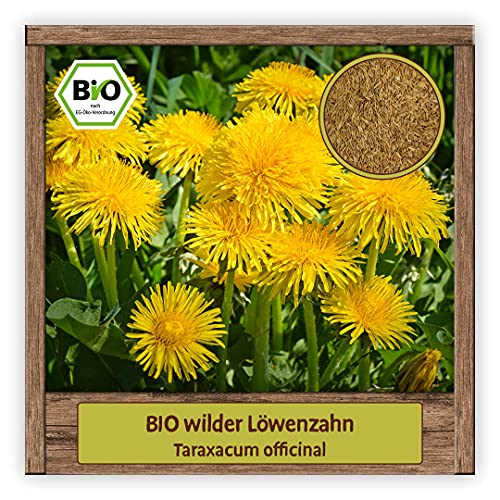 BIO wilder Löwenzahn Samen Kräutersamen (Taraxacum officinal) Wildblume mit essbare Blüten mehrjährig & winterhart