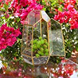 Immagine 1 mingze piante trasparente geometrico terrario