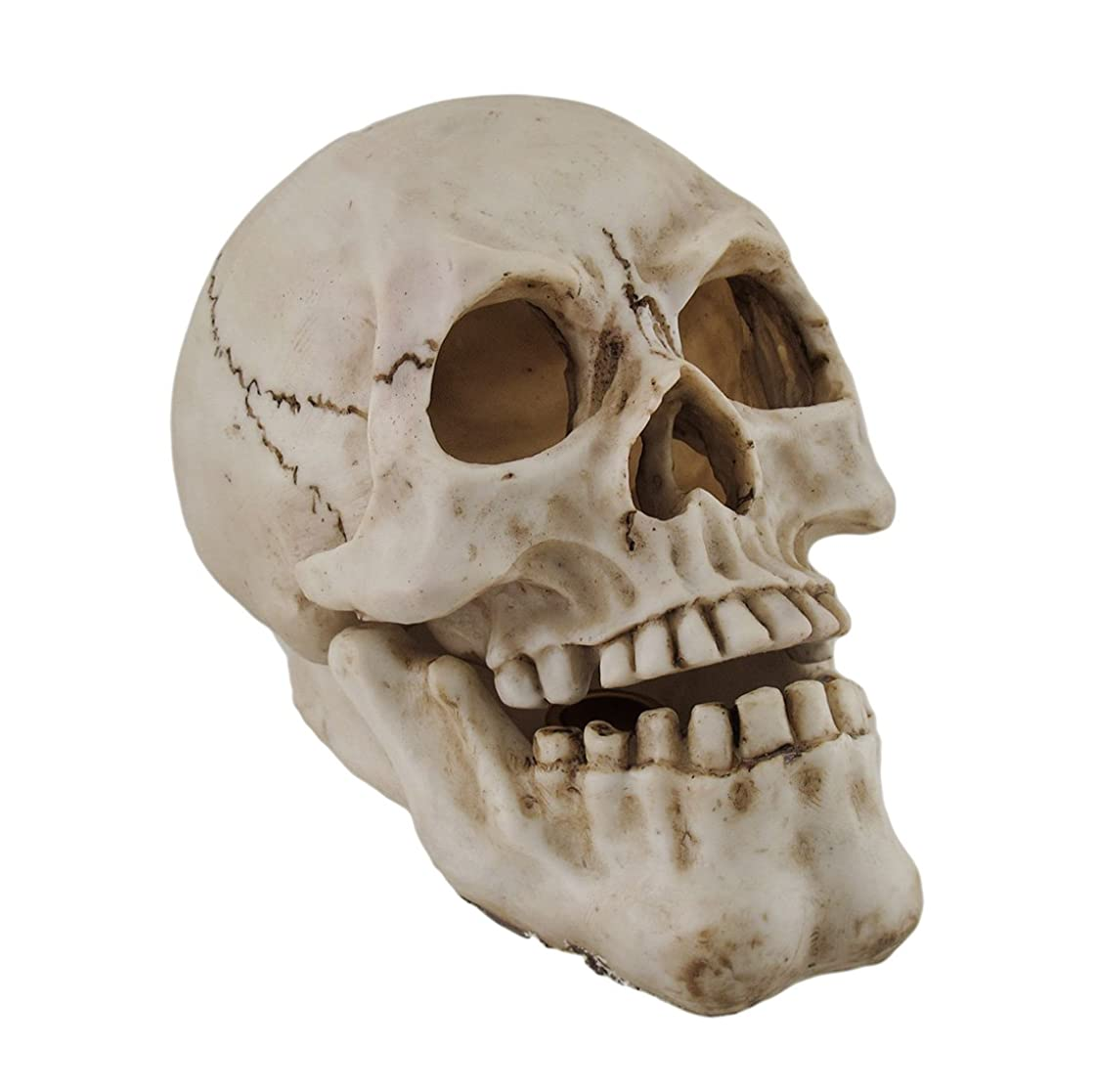 ロケット突撃ジャケット樹脂IncenseホルダーHuman Skull Shaped Incense Burnerボックス7.75?X 5.75?X 4.5インチホワイトモデル# pwh-63