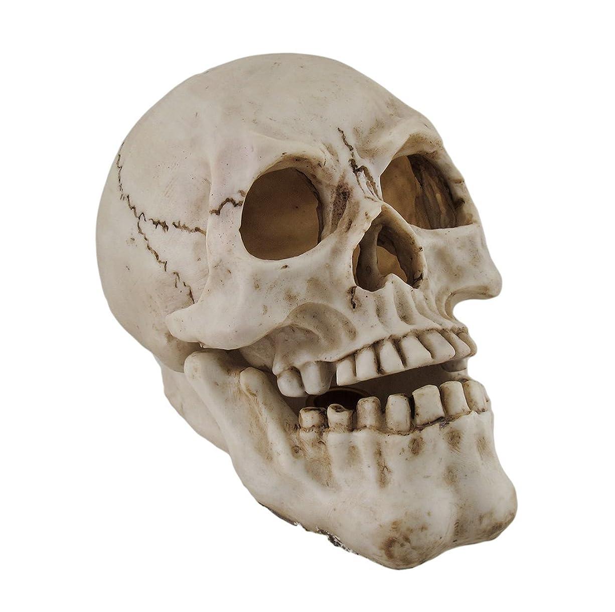 失敗現代の縫い目樹脂IncenseホルダーHuman Skull Shaped Incense Burnerボックス7.75?X 5.75?X 4.5インチホワイトモデル# pwh-63