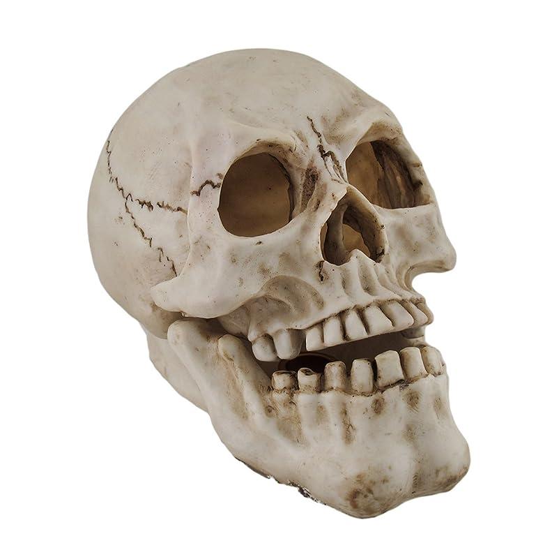 風くるみプレゼンター樹脂IncenseホルダーHuman Skull Shaped Incense Burnerボックス7.75?X 5.75?X 4.5インチホワイトモデル# pwh-63