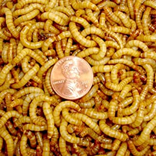 3000ct Live Mealworms Live Pet Food & Best Bait