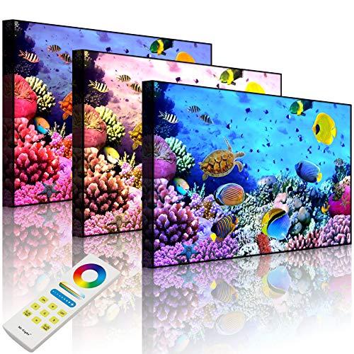 Lightbox-Multicolor | LED Bild Leuchtbild | Bunte Fische über Korallenriff | 80x60 cm | Front Lighted