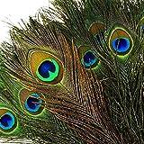 100pcs Plumes Naturelles de Paon avec des Yeux de Plumes de Queue de Paon 10'- 12' (25-30cm) Parfait pour la Fête de Mariage Arts and Crafts Home Decorations