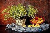 PrintExpert_Yellow Flower Flower Basket Scarf Fruit Peach Nectarine_13x19 matt Poster