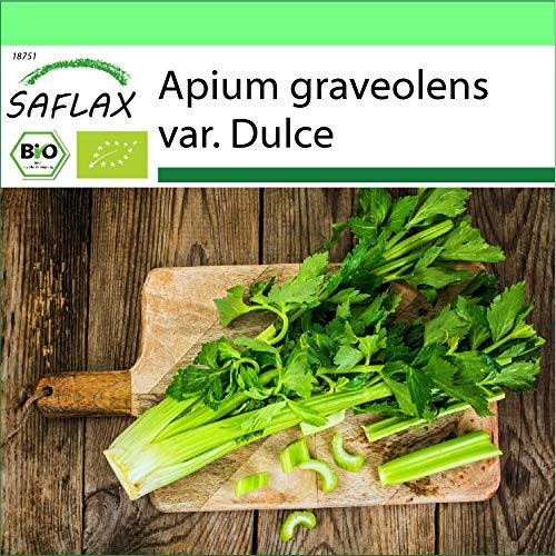 SAFLAX - Garden to Go - BIO - Stangensellerie - Tall Utah - 500 Samen - Mit Tontopf, Untersetzer, Anzuchtsubstrat und Dünger - Apium graveolens