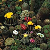 Sólo Semilla - Flor - Cactus - Corona Mix - 100 semillas - Espectacular