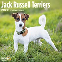 2020 Jack Russell Terriers Calendar 16 Month 12 x 12 Wall Calendar by Bright Day Calendars (Terriers Collection)