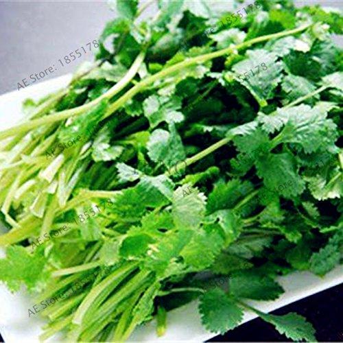 30pcs/sac de graines de persil balcon quatre grandes saisons peuvent pousser les graines de coriandre Graines de légumes bonsaïs Semences pour la maison et le jardin