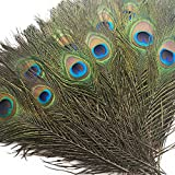 Piokio 50 pcs Natural Peacock Feathers in Bulk 10'-12' for Wedding Crafts Christmas Decorations