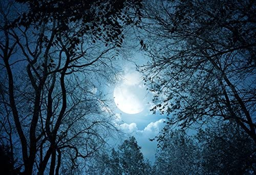 Yeele 10x8ft Forest Night View Backdrop Night Sky Moon Moonlight Tree Photography Background product image