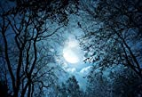 Yeele 10x8ft Forest Night View Backdrop Night Sky Moon Moonlight Tree Photography Background Pictures Baby Girl Boy Adult Portrait Photo Booth Vinyl Wallpaper Photocall Studio Props