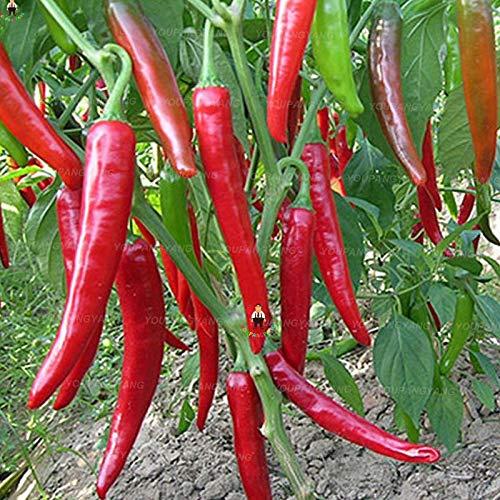 New 200pcs / sac à long piment bonsaïs poivron rouge ton bonsaï fruit bonsaï légumes pour le bricolage jardin à domicile Violet Livraison gratuite (GRAINES SEULEMENT)