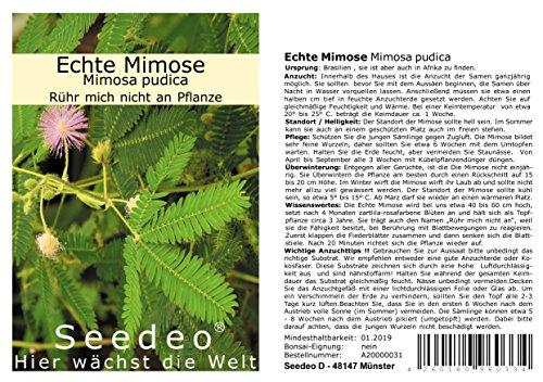 Seedeo® Echte Mimose (Mimosa pudica) 150 Samen