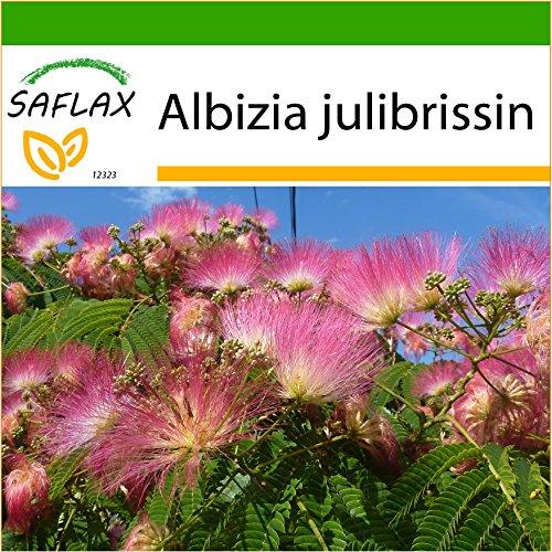 SAFLAX - Albizia - 50 graines - Avec substrat - Albizia julibrissin