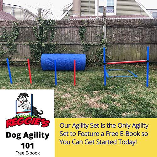 Reggie's Dog Agility Equipment Set