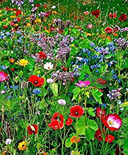 Wild Flower Seeds Meadow Grass Mix Grass 10g Buy 2 GET 2 Free 80% Meadow Grasses 20% Wildflowers