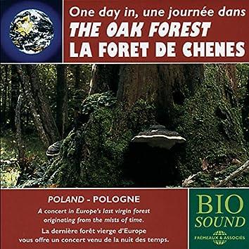 Poland: the Oak Forest - La forêt de chênes en Pologne