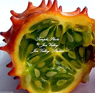 African Horned Cucumber Cucumis metuliferus Non GMO Seeds Kiwano African Native 20 Seeds with Tracking