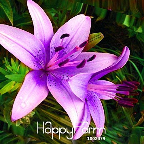 Promotion! 50 Pièces rares rose pourpre Lilium brownii Graines Fleurs Balcon Bonsai Cour des plantes Lily Graines, # SLASCS