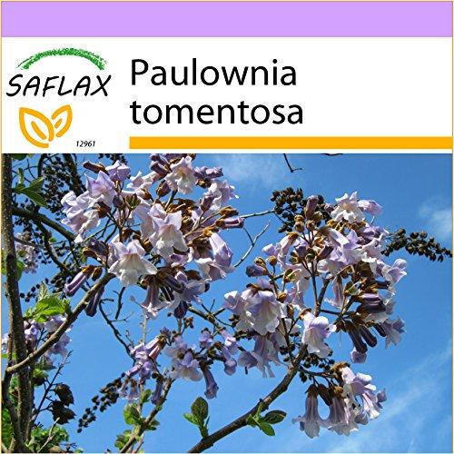 SAFLAX - Paulonia - 200 semillas - Paulownia tomentosa
