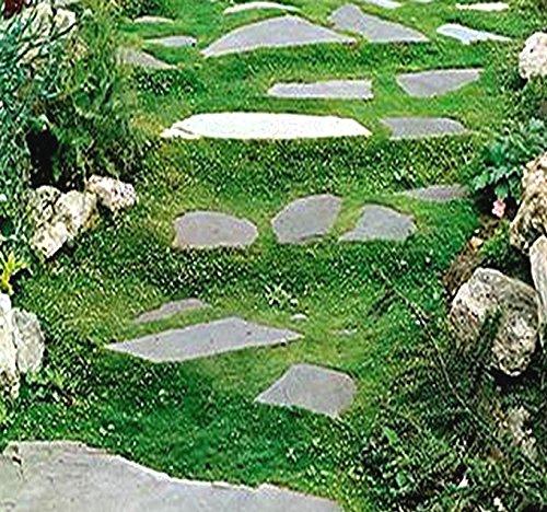 Irish Moss Seeds, Sagina subulata, Heath Pearlwort, Perfect in Garden, Lawn Substitute Or in-Between Stones, Groundcover Heath Pearlwort, Zones 4-10 - by MySeeds.Co (5000 Seeds)