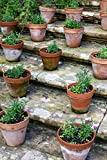 Flowers in Terracotta Pots on the Garden Steps Spring Journal: 150 Page Lined Notebook/Diary