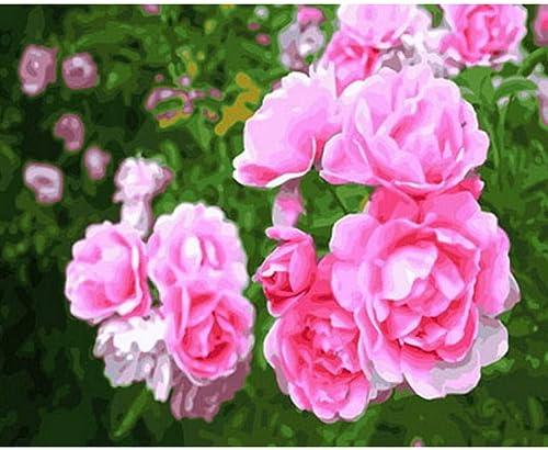 Waofe Tableau Peintures à L'Huile Par Numéro Fleurs Décor Mural Mur Peinture Bricolage Sur Toile Rose Rose- With Frame3