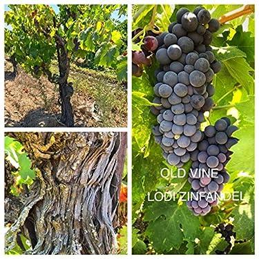 50 Pounds - Ultra Premium Zinfandel Grapes - California, Lodi AVA - WineGrapesDirect - Frozen Grape Must for Winemaking
