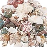 PandaHall 330 g de Forma Mixta sin perforar, Cuentas de Concha de mar sin Agujero, Conchas Marinas Naturales del ocano de la Playa, Conchas Marinas para decoracin del hogar, Fiestas, Bodas