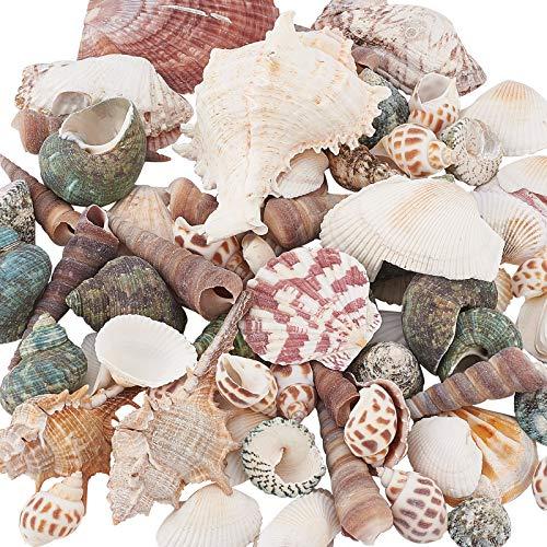 PandaHall 330 g de Forma Mixta sin perforar, Cuentas de Concha de mar sin Agujero, Conchas Marinas Naturales del océano de la Playa, Conchas Marinas para decoración del hogar, Fiestas, Bodas