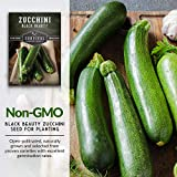 Survival Garden Seeds - Black Beauty Zucchini Seed for Planting - Packet with Instructions to Plant and Grow in Your Home Vegetable Garden - Non-GMO Heirloom Variety