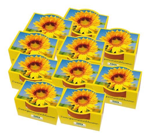 10er Set Minipflanzset Zwergsonnenblume