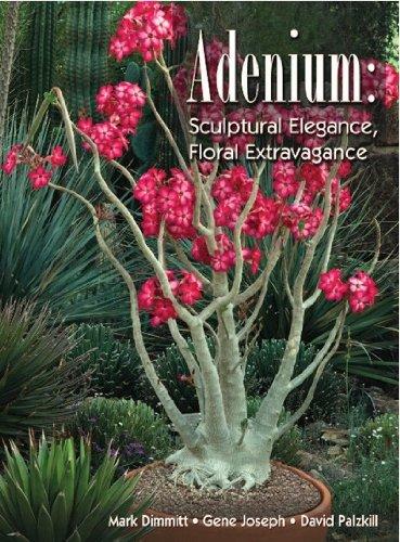 Adenium - Sculptural Elegance, Floral Extravagance