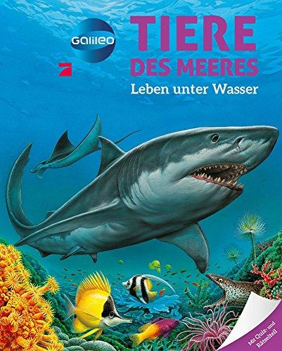 Galileo Wissen: Tiere des Meeres - Leben unter Wasser