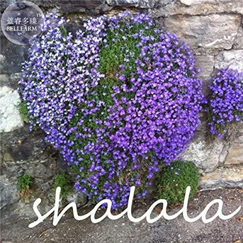 HONIC 200 Stück A Bag Lobelia Pflanze Bonsai Blume Flores, Bodendecker Chlorophytum Gartengestaltung leuchten Ihren Garten: 14