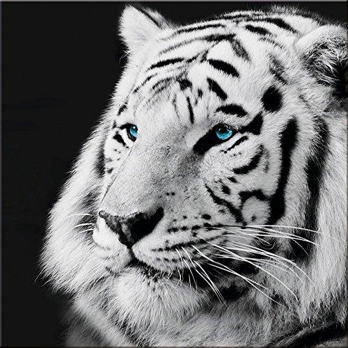 artissimo, Glasbild, 30x30cm, AG2094A, In The Jungle II, Tiger, schwarz-weiß, Bild aus Glas, Moderne Wanddekoration aus Glas, Wandbild Wohnzimmer modern