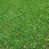 Outsidepride Sweet Spot Northern Deer Foot Plot Seed - 10 LBS