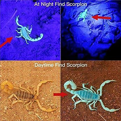 2 Pack UV Flashlight Black Light, Escolite 51 LED 395nm Ultraviolet Blacklight Detector for Dry Pet Urine and Bed Bug 3