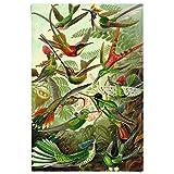 Kolibries Ernst Haeckel Kunstformen der Natur - Poster