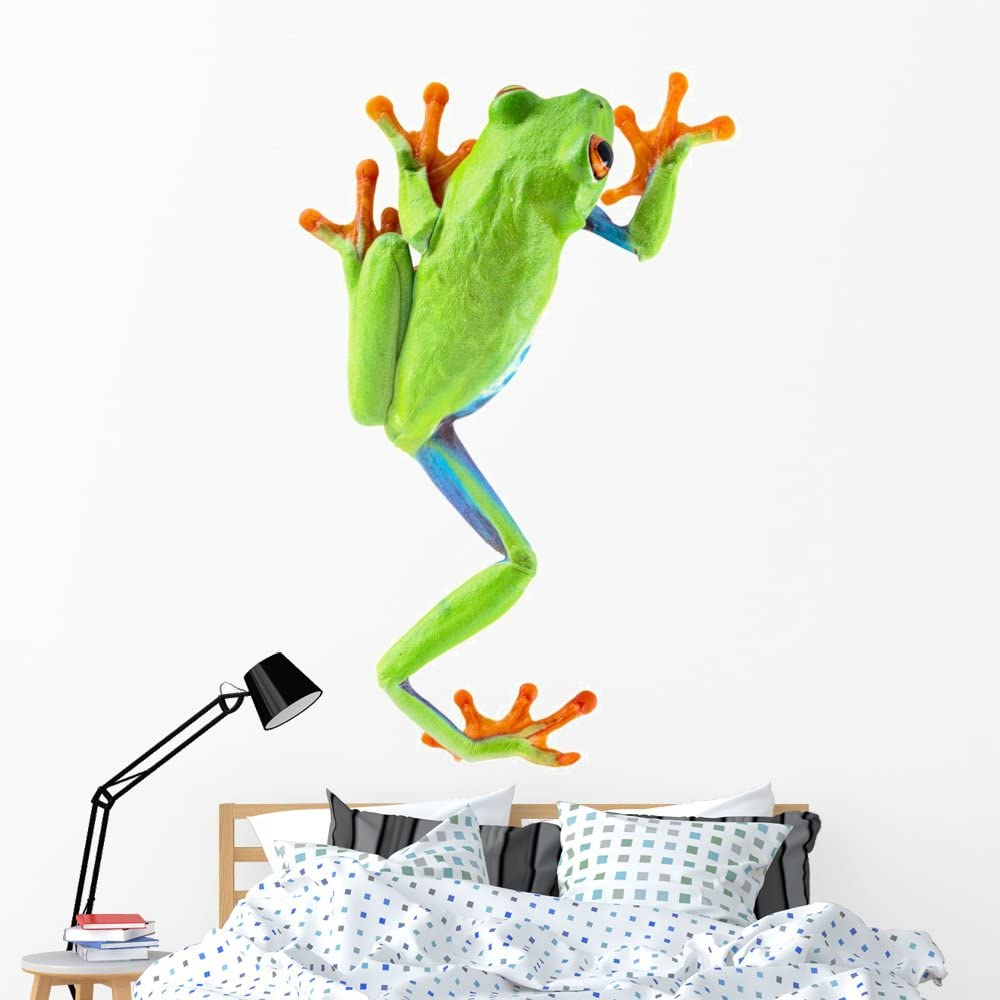 Wallmonkeys Red Eyed Tree Frog Wall Manufacturer direct delivery Popular shop is the lowest price challenge Decal Peel Stick and Animal