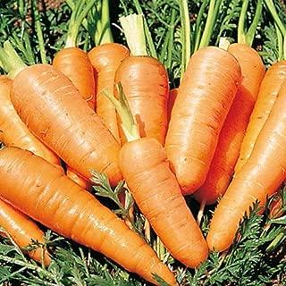 Best danvers half long carrots Reviews