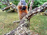 Groundhogs are Squirrels and They Eat in Trees!