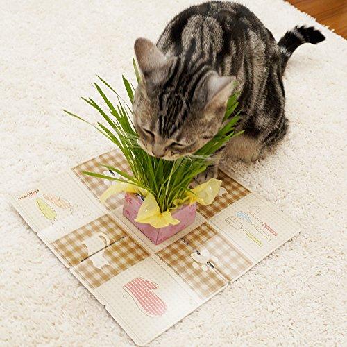 キャティーマン『ネコちゃんの新鮮野菜レストラン』