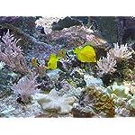 Silbermann-Meersalz-pro-Color-8-KH-fr-Meerwasseraquarium-Riffaquarium-in-verschiedenen-Gren